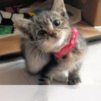 【朗報】担当者驚き!東大ネコ研究に2日余りで寄付3千万円!「やはりネコは地球を救う。」