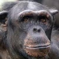 【悲報】「新型コロナのワクチンを打つとチンパンジーになる」というデマ拡散を試みたアカウントをFacebookが削除!「閉鎖理由はデマではなく、画像な気もする。」