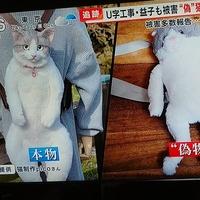 【これはひどい】めざまし8で放送「猫リュック」詐欺の被害が急増! U字工事の益子卓郎さんも被害に!猫のクオリティがwww