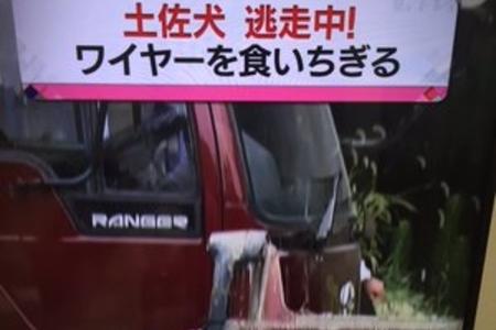 【危険】体長1m 土佐犬が逃走中 広島市安佐北区「これ熊も倒せるレベルの犬じゃん」まとめのカテゴリ一覧まとめまとめについて関連サイト一覧